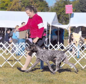 ScoopMovementLexington.jpg